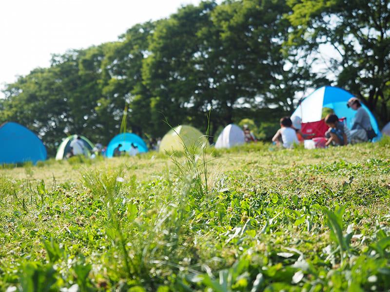 自然いっぱいキャンプ、公園に潜む危険
